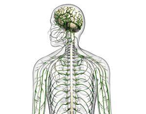 živčani sistem