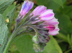 Herbarium - Gavez