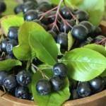Prednosti aronije za vaše zdravlje