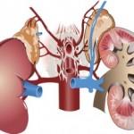 Prepoznajte faktore rizika za bolesti bubrega