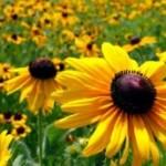 Upotreba cvijeća u liječenju