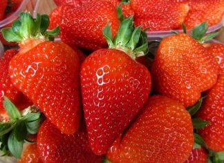 domaće jagode