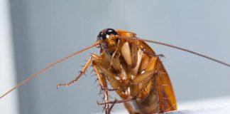 Kako protiv žohara