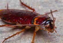 Kako ukloniti žohare