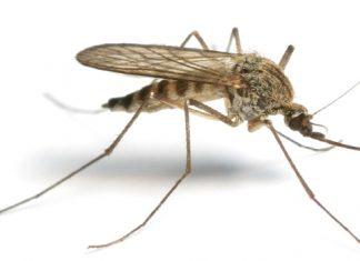 kako protiv komaraca