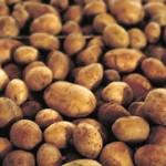 Krumpir je jako zdrava namirnica