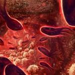 Zadaća krvotoka u našem organizmu – Tegobe i prirodno liječenje
