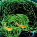 Virusi i bakterije mogu oslabiti pamćenje
