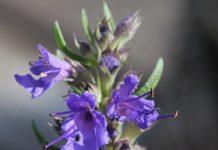 Herbarium - Miloduh