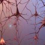 Cink i mozak
