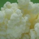 Ljekovita svojstva tibetanske gljive
