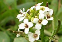 Herbarium - Dragušac