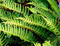 Herbarium - Oslad