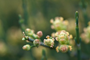 ljekovita biljka