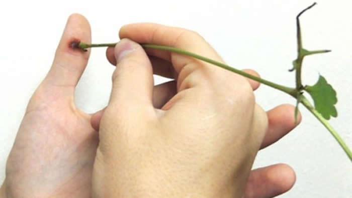 Kako ukloniti bradavice