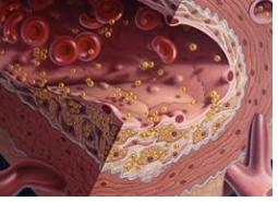 krvotok