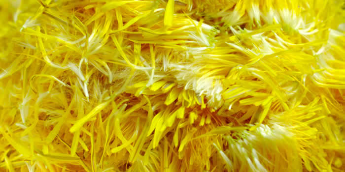 Sirup od latica maslačka