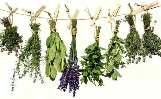 ljekovite biljke