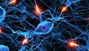 moždane ćelije