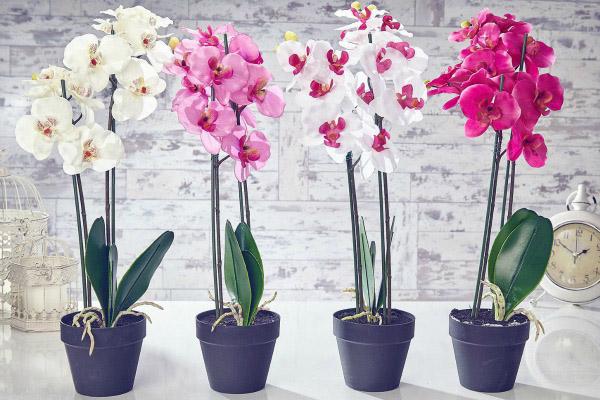 orhideja sobne biljke za pozitivnu energiju