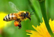pčele, zmije, rakovi kriju lijek za RAK