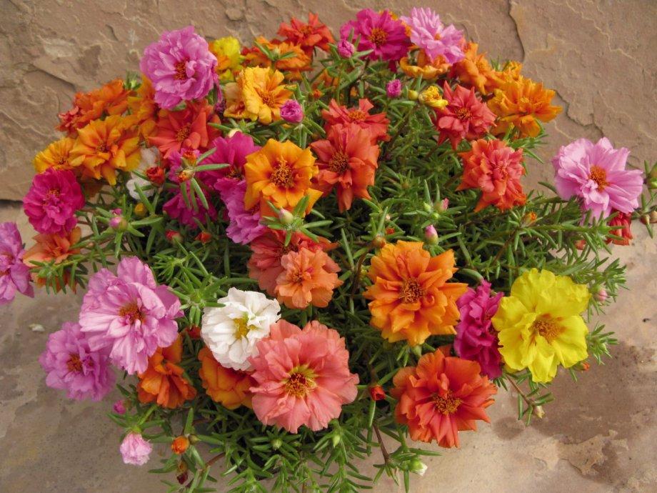 prkos cvijeće