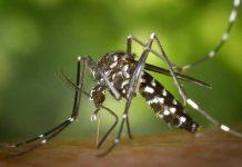 Zašto ubod komarca svrbi